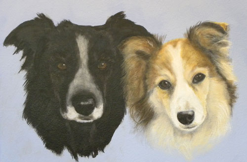 Portrait of Border Collie and Sheltie - Baccus and Josie