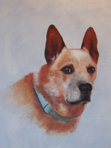 Portrait of Cattle Dog - Taber